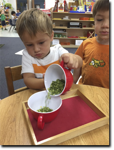 Child transferring beans to other container